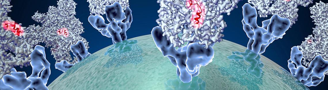 Coronavirus spike protein structure.