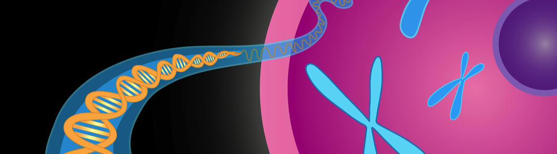 Depicted is an illustration of a DNA double helix (longer and skinnier on the left) and chromosomes (similar to the letter x)