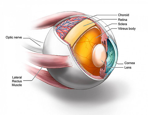 A diagram of the eye