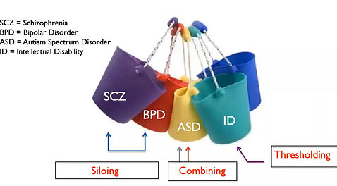 Colorful buckets each labeled for schizophrenia, bipolar disorder, ASD, intellectual disability - with some combined and others siloed