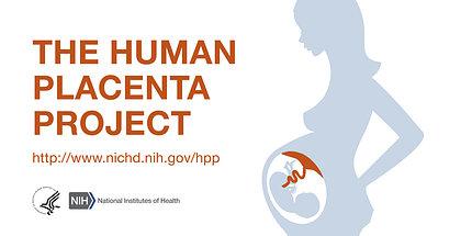 Human Placenta Project logo