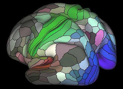 Image of cortex