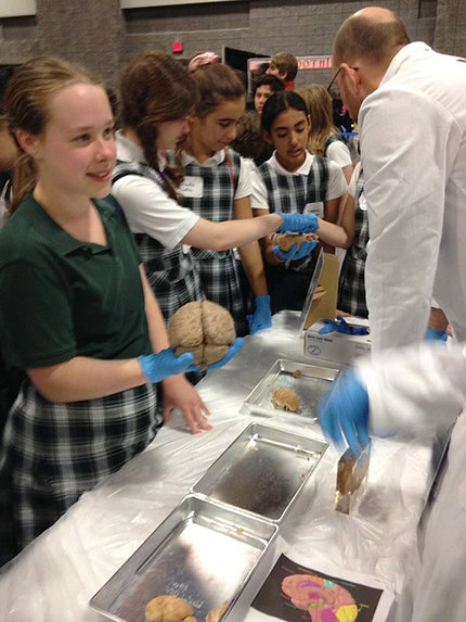 Young students hold human brains during USA Science and Engineering Festival.