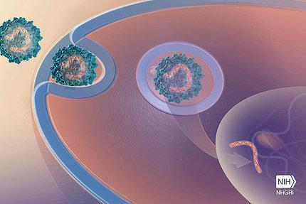 Illustration of cells