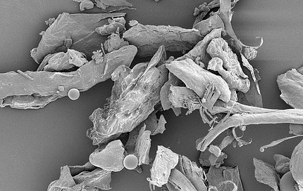 Household dust, magnified