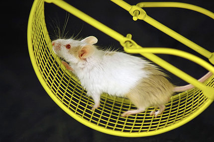 Mouse on a hamster wheel
