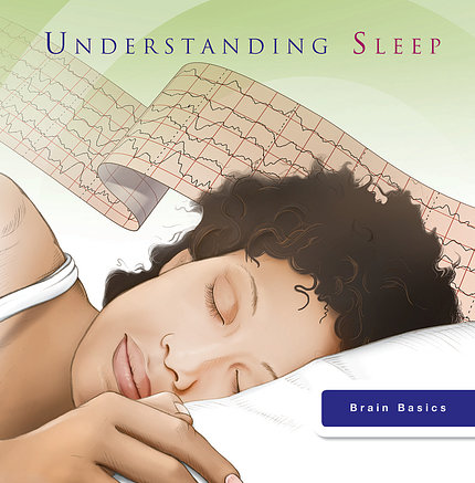 Understanding Sleep (Brain Basics)