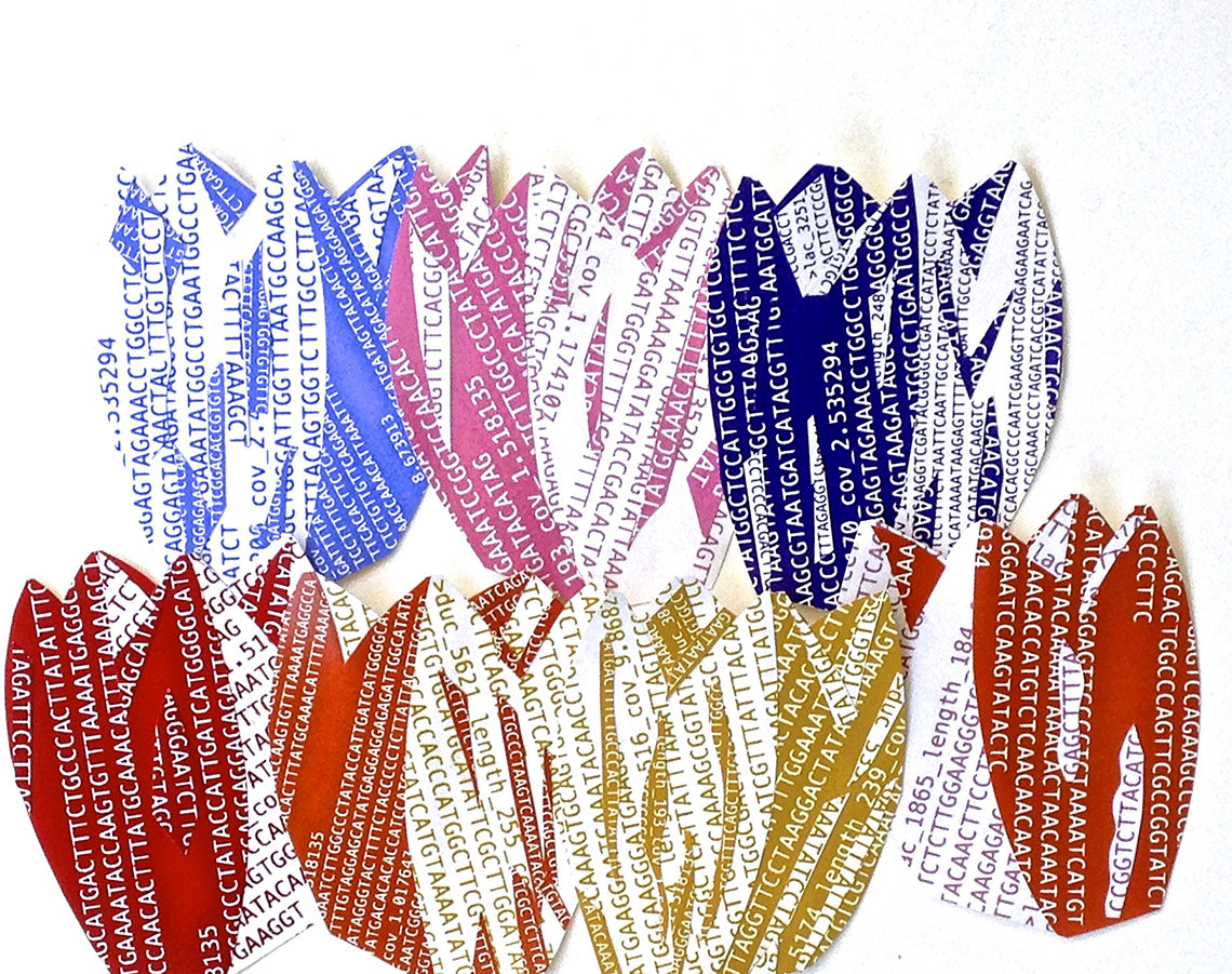 Several tulip-shaped collages using DNA sequences