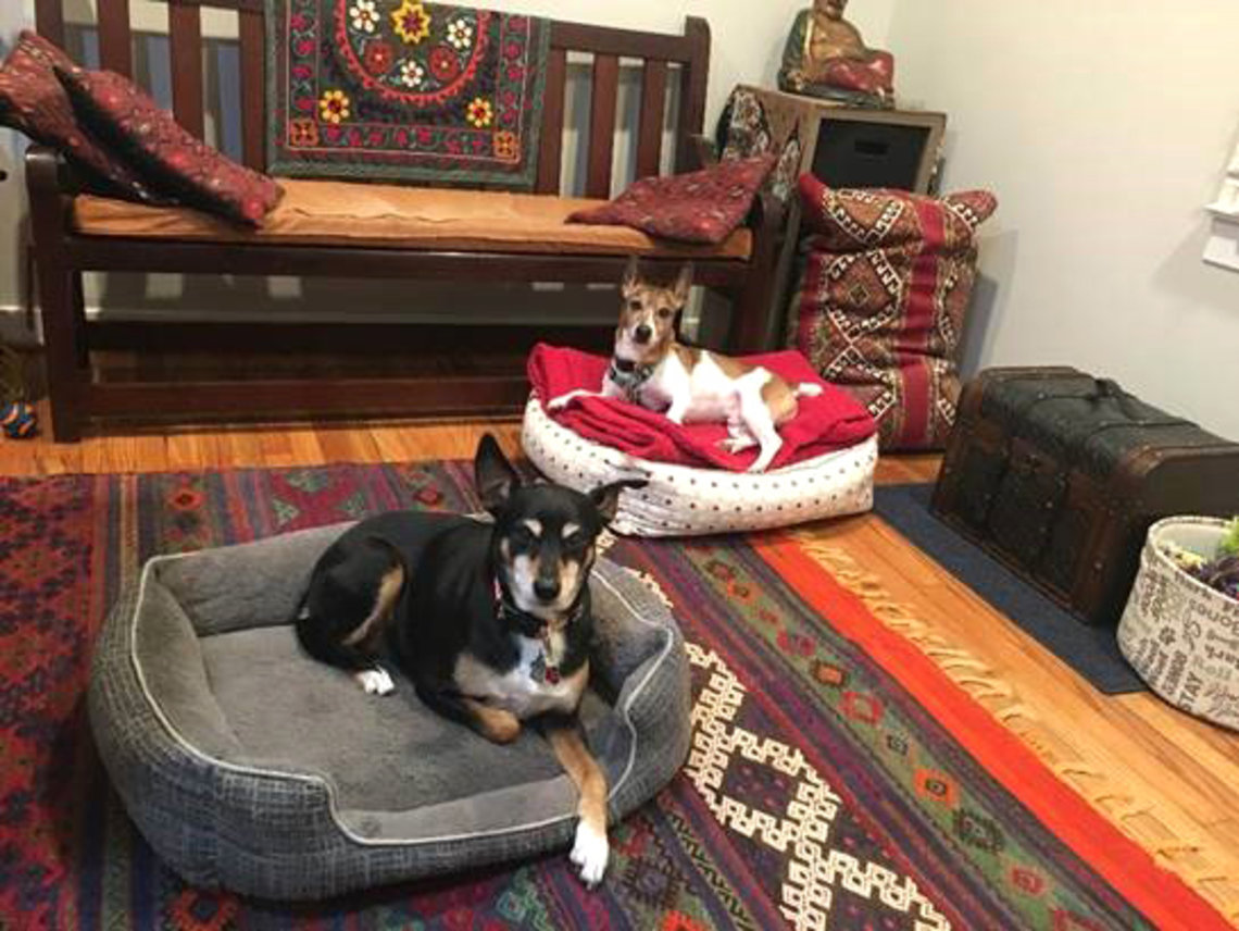 Two dogs in dog beds