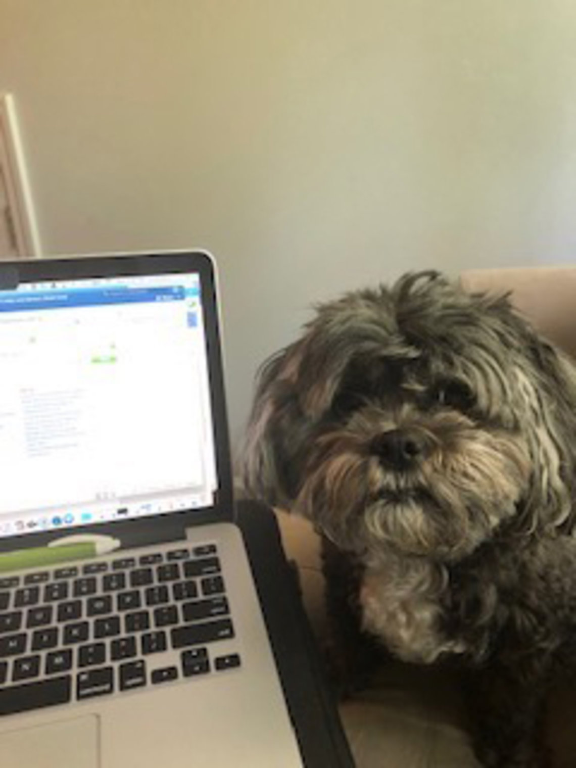 A dog sits next to a laptop screen