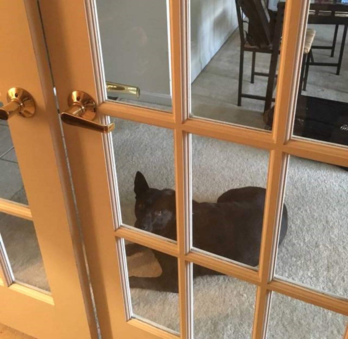 A dog sits on the other side of french doors