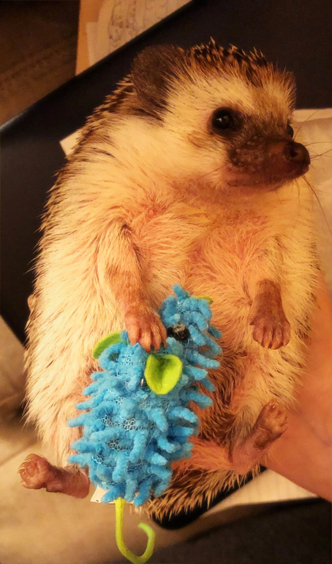 A hedgehog hugs a play mouse