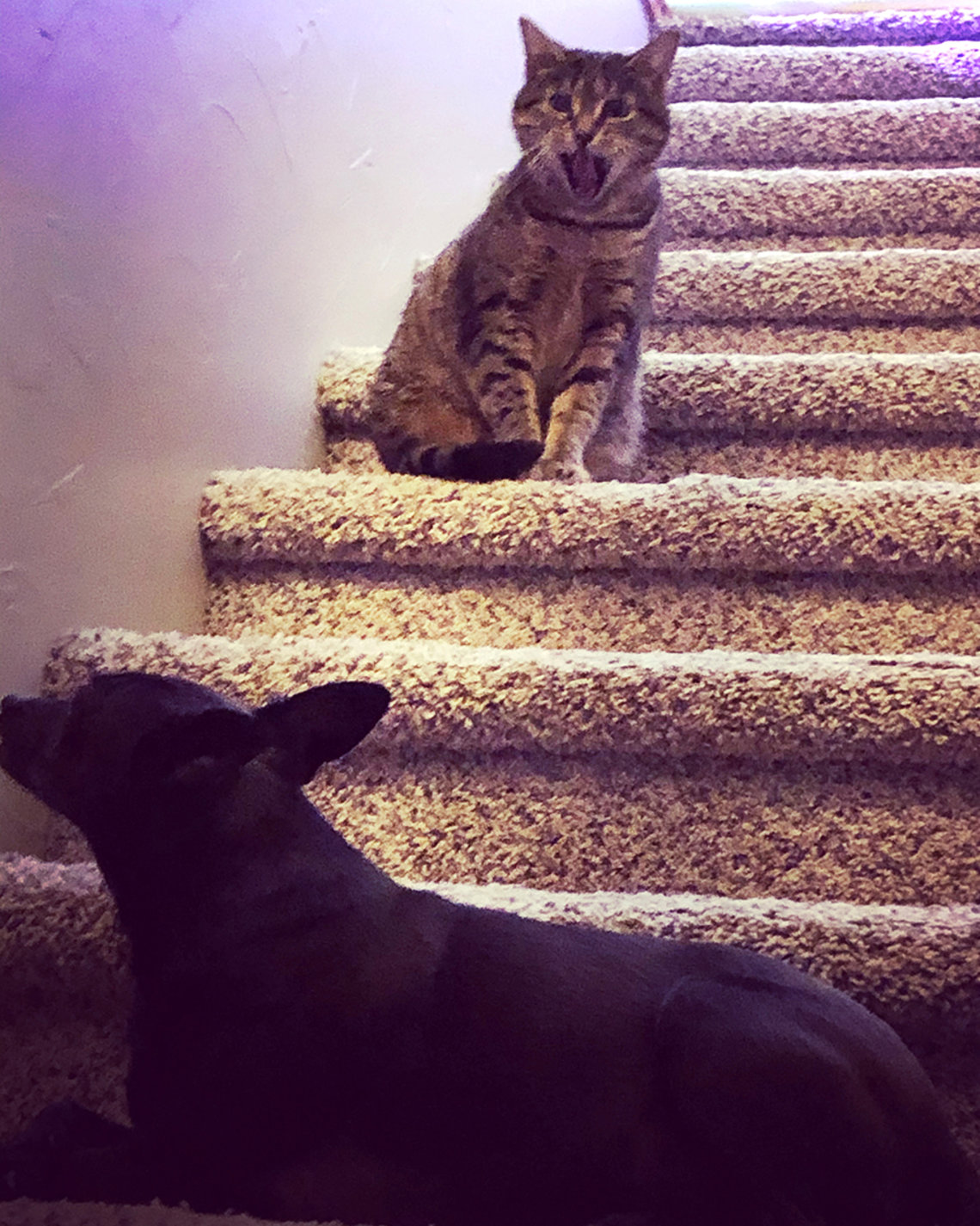 A dog and cat on stairs