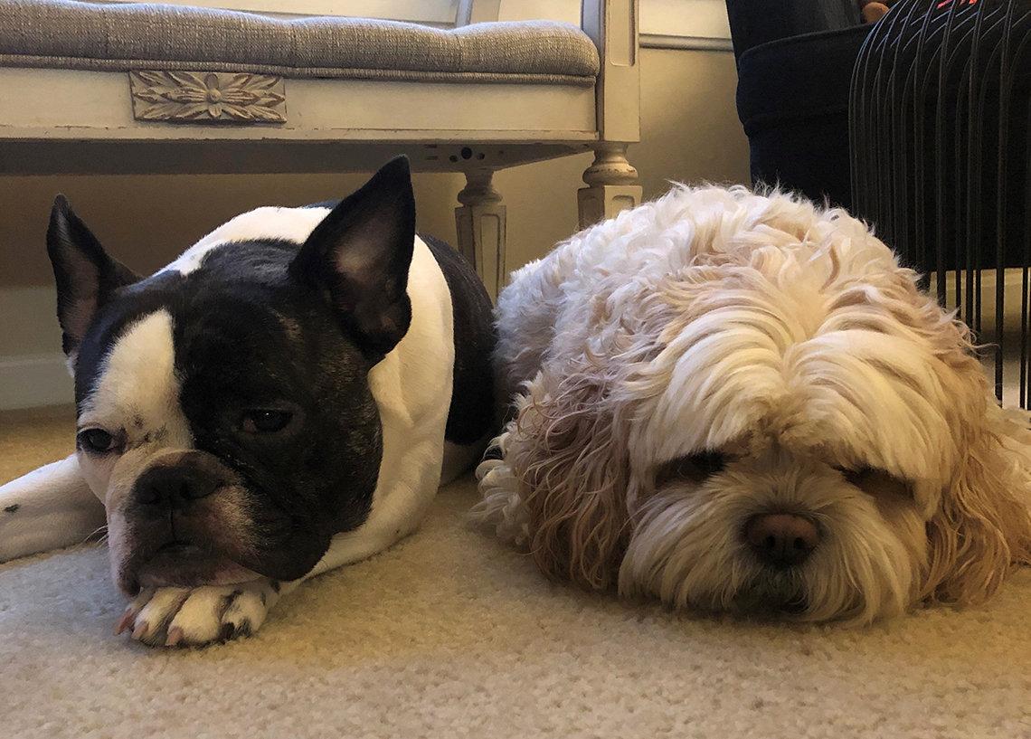 Two dogs sleep