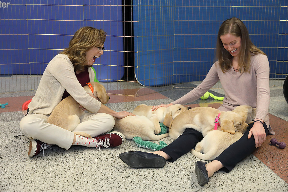Riddle (l) and Rice sit on floor with puppies spread over their laps.