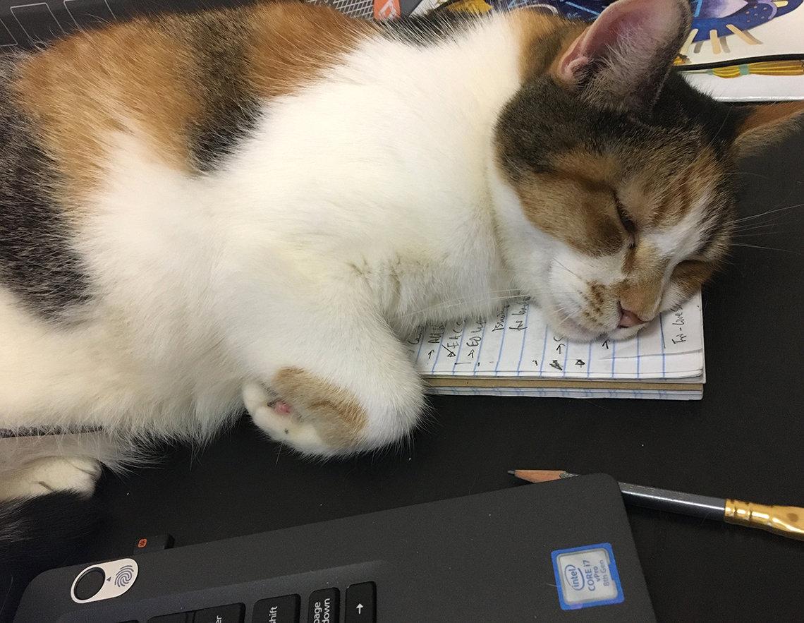 A cat naps on Fichter's steno pad