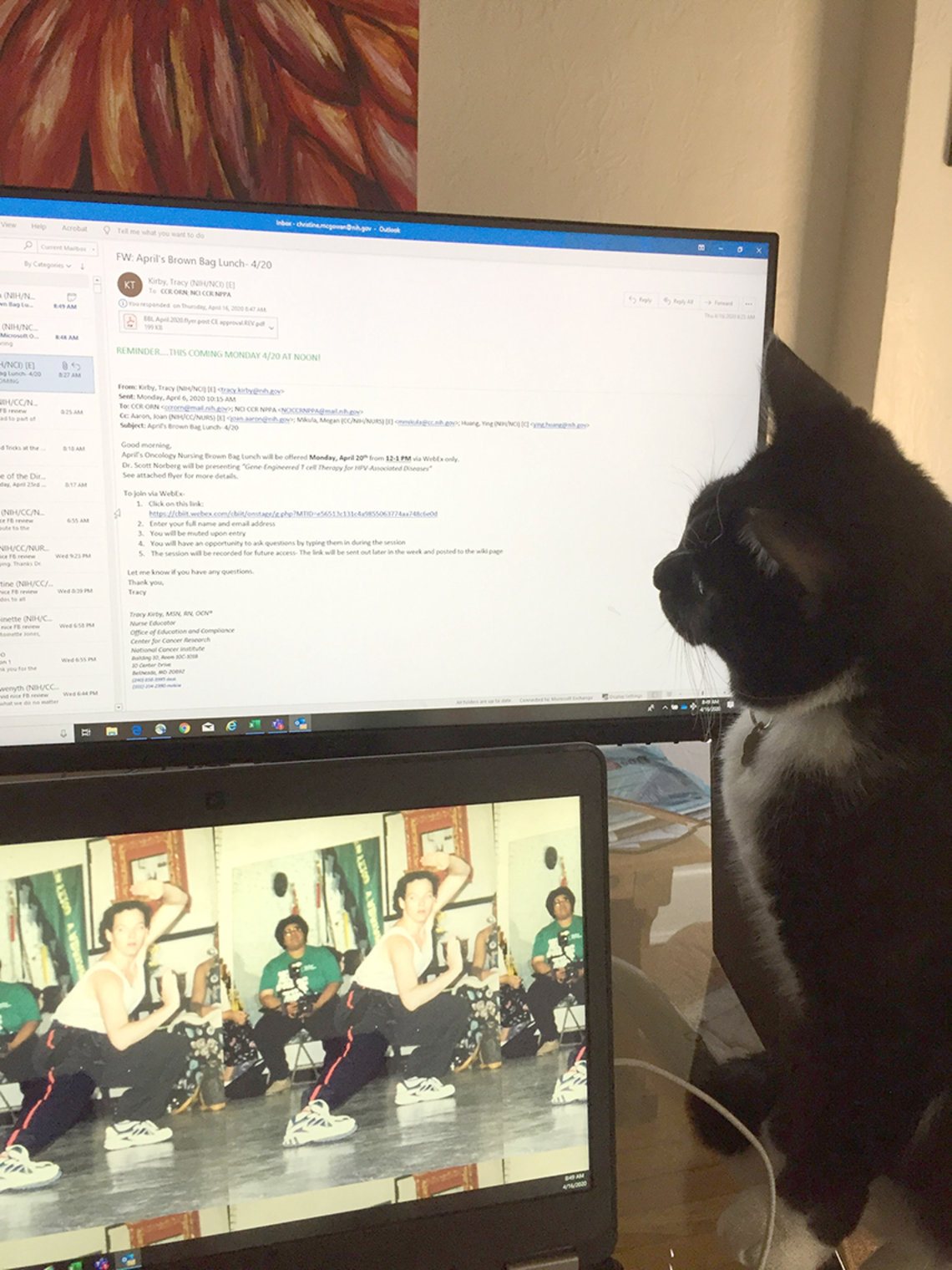 Cat sits in front of computer screen.