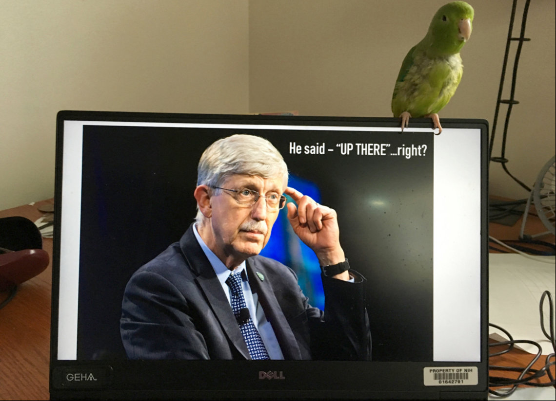 Bird perched atop computer monitor with image of NIH director Dr. Francis Collins showing on screen