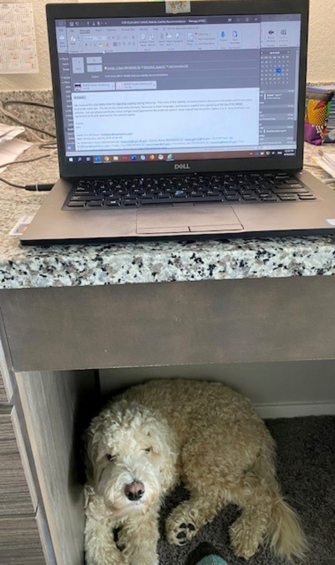 Dog crouches under workstation.