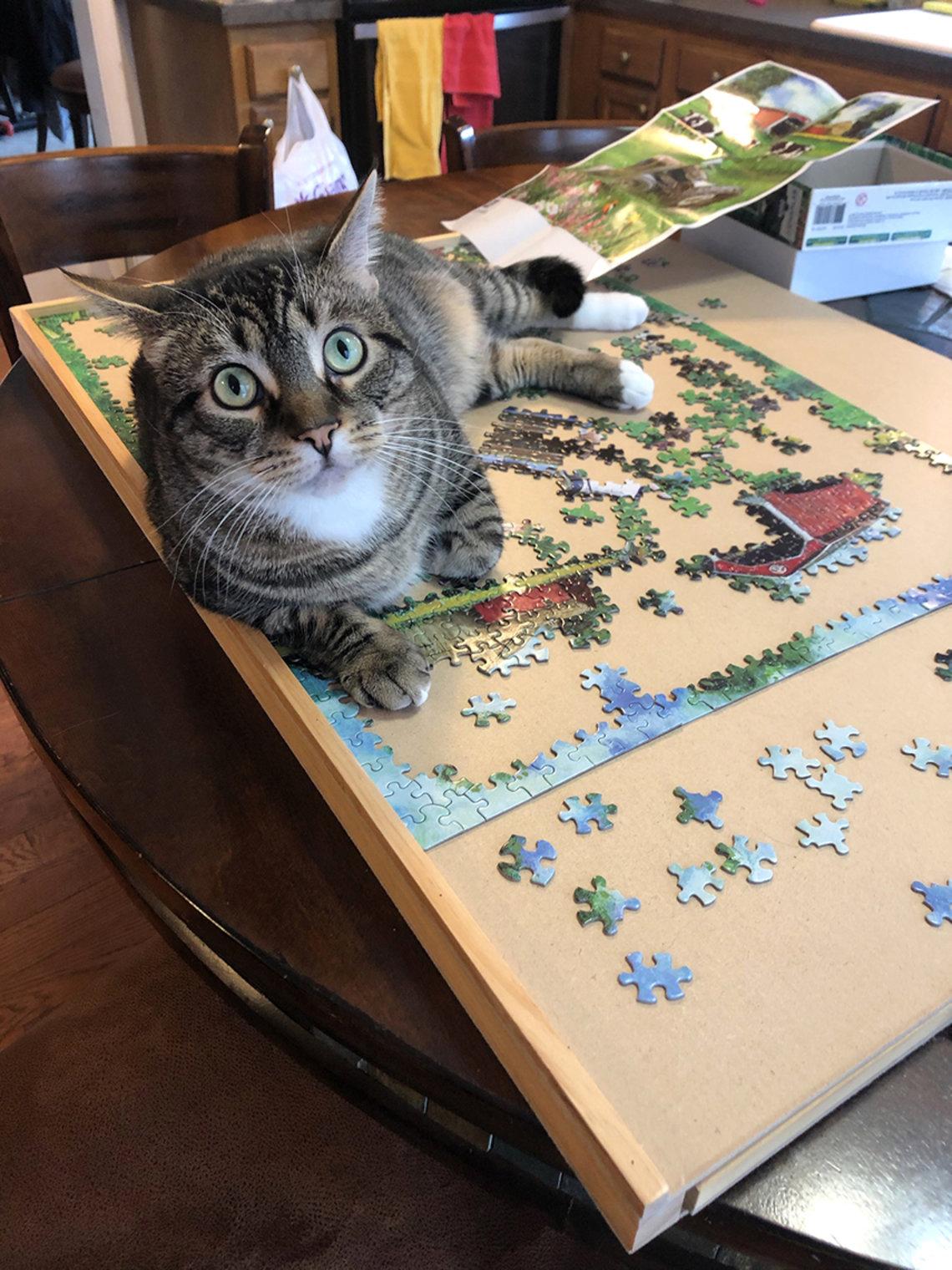 Cat sits atop puzzle.