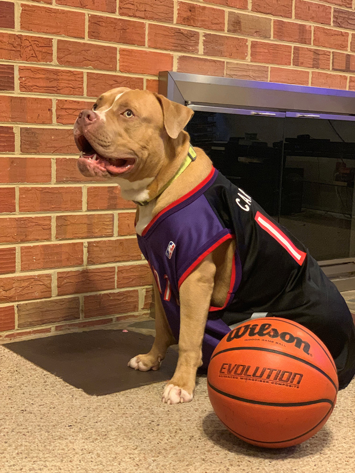 Dog in jersey sits next to basketball.