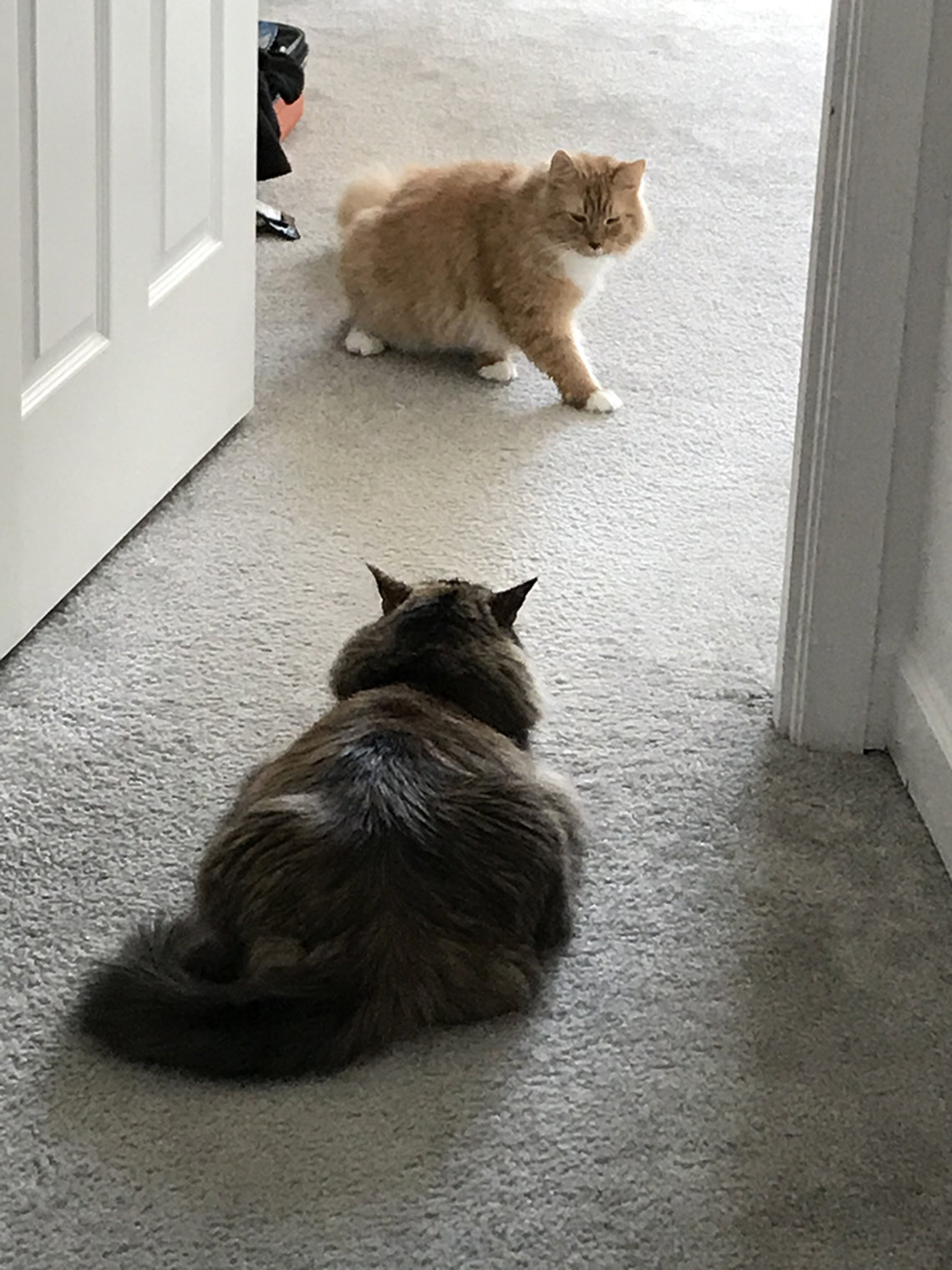 Two cats regard one another in doorway.