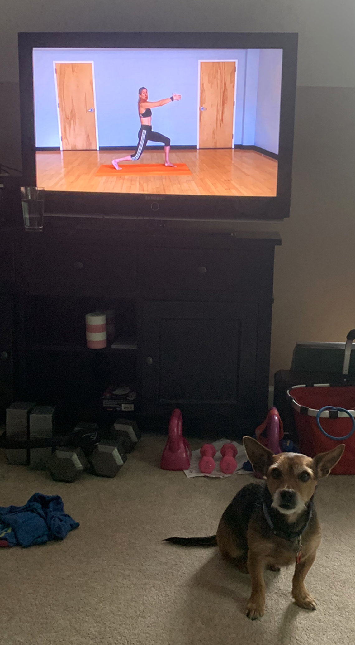 Dog in front of exercise video