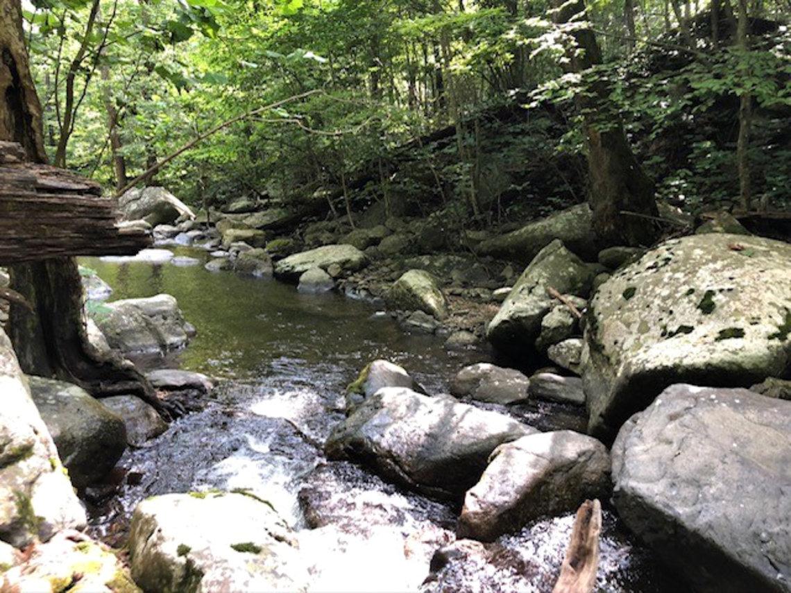 Creek flowing through large rocks and vegetation