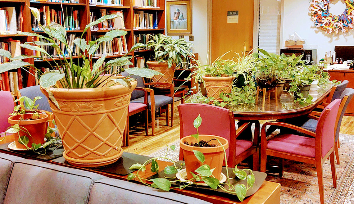 Potted house plants on tables and counters of a library room