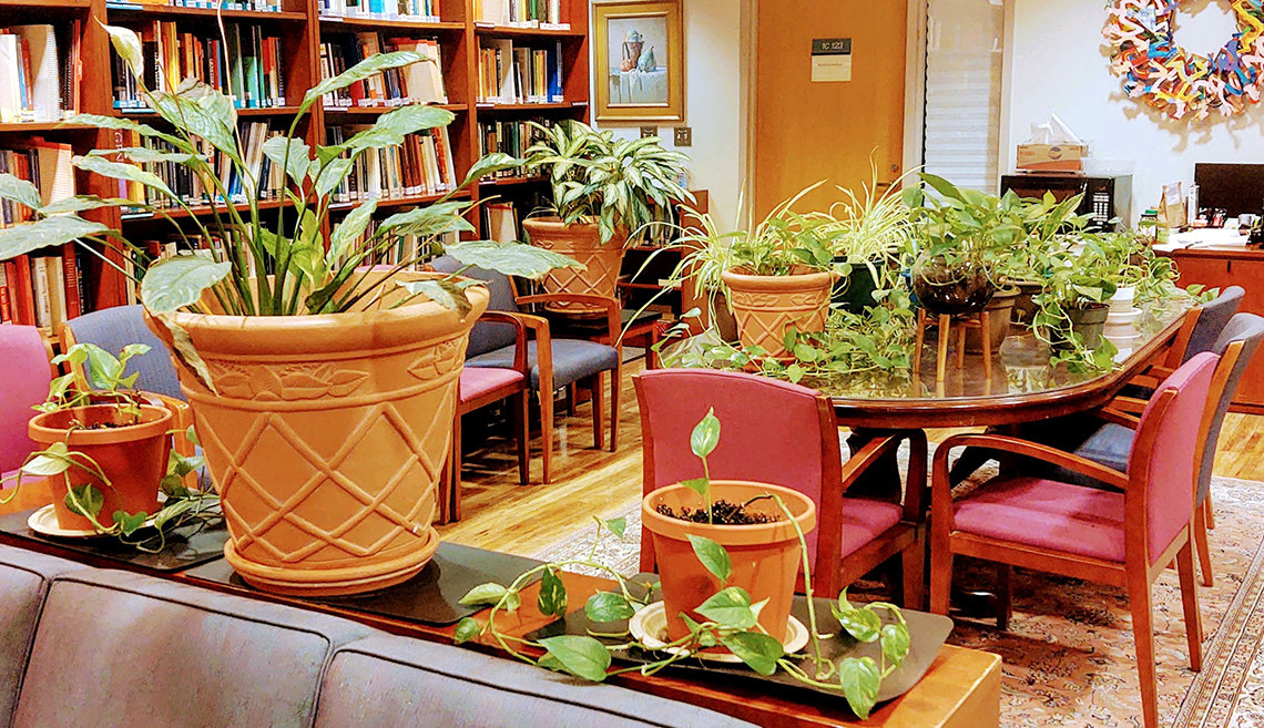 A plant-filled room