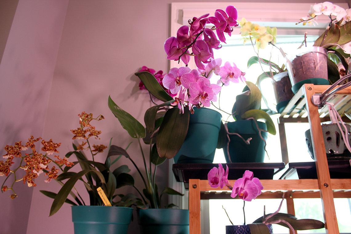 3 plants in bloom on shelves