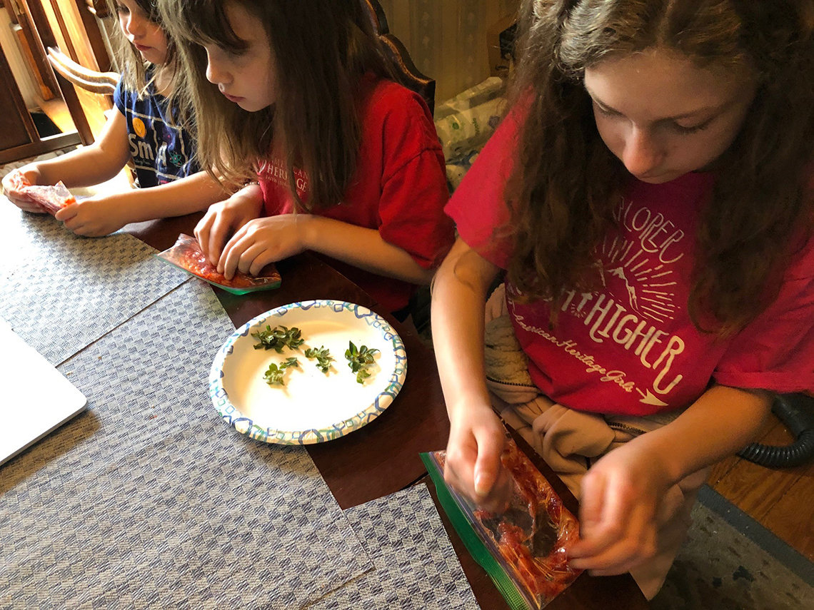 Three girls sit at a kitchen table and smash strawberries in a plastic bag, one step to extract DNA from strawberries