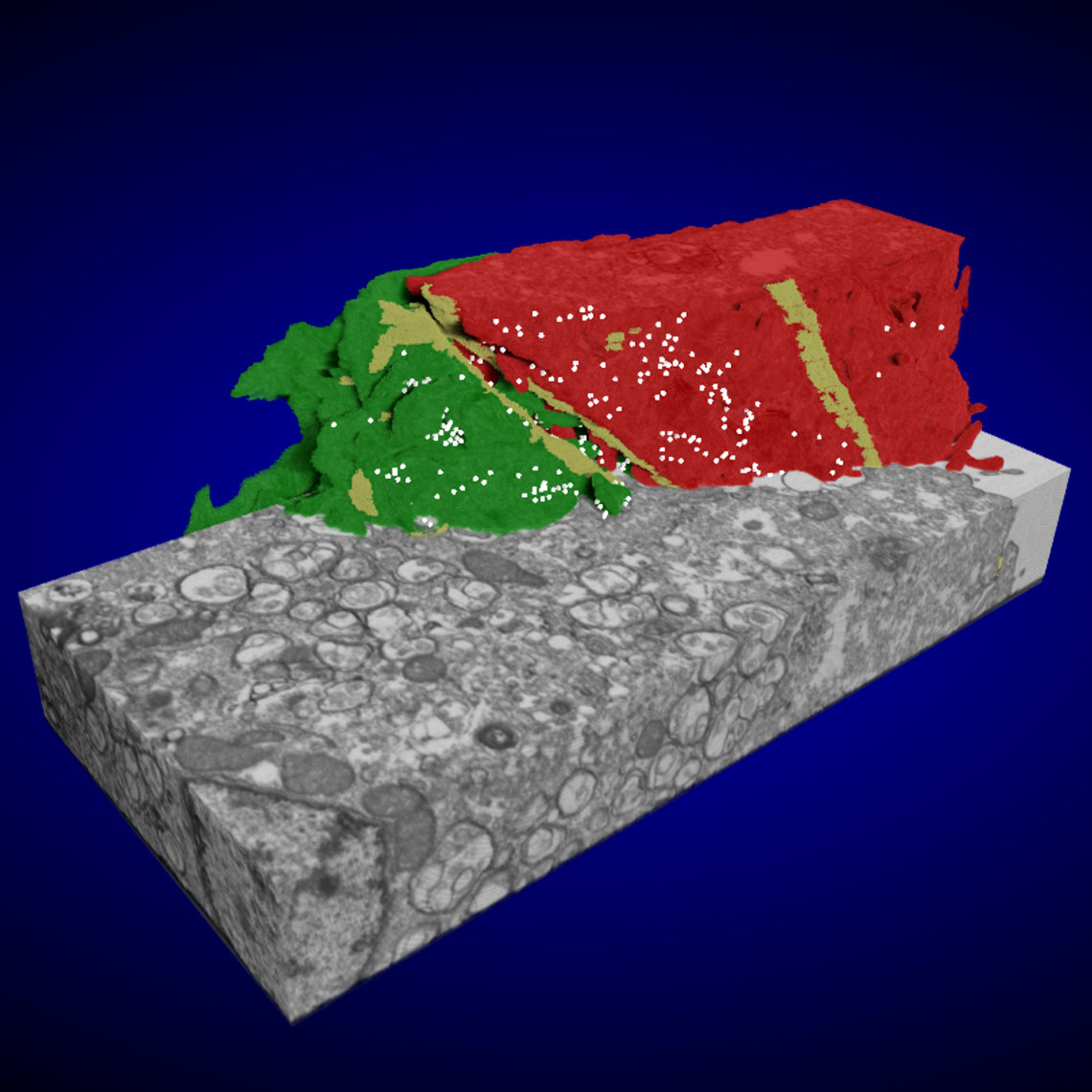 The image shows a gray rectangle with a red and green shape set on a blue background
