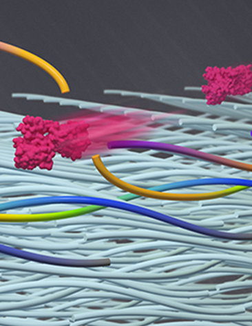 Colorful rods float over white collagen fibers.