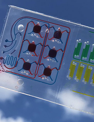 A rectangular plastic case holds colofrul human cells in a 3D matrix.