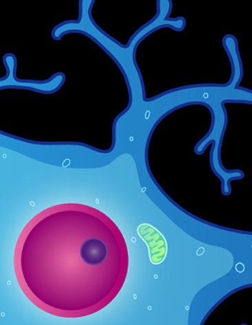 Illustration of neuron with dendrites and nucleus