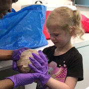 Natalie Hash, 5, is trying to hold an adult brain, but the smell of formaldehyde is overpowering. Her dad, Ryan Hash, was with her at NICHD's 'Unpack the Brain,' led by Archie Fobbs, a guest host from the Museum of Science and Medicine in Silver Spring. PHOTO: MEREDITH DALY